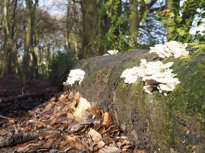 Fungi JPEG