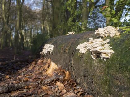 Fungi Raw
